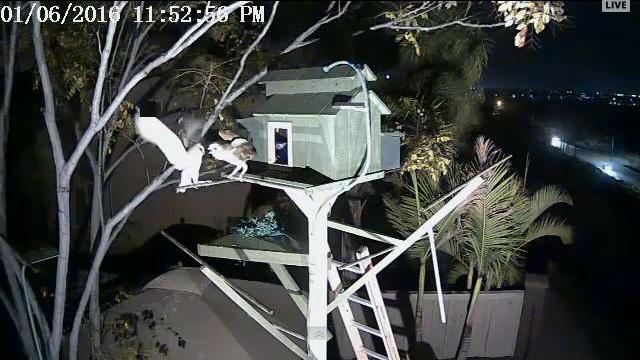 Вебкамера в домике совы