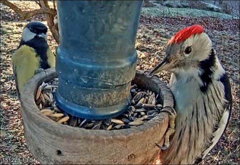 Вебкамера у кормушки для птиц- синицы