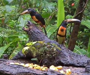 Вебкамера кормушка для птиц