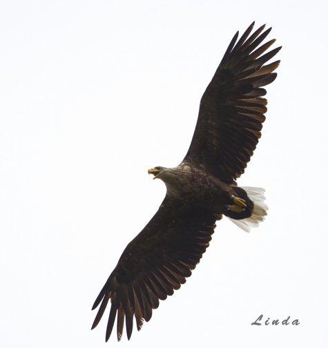 Вебкамера в гнезде орла